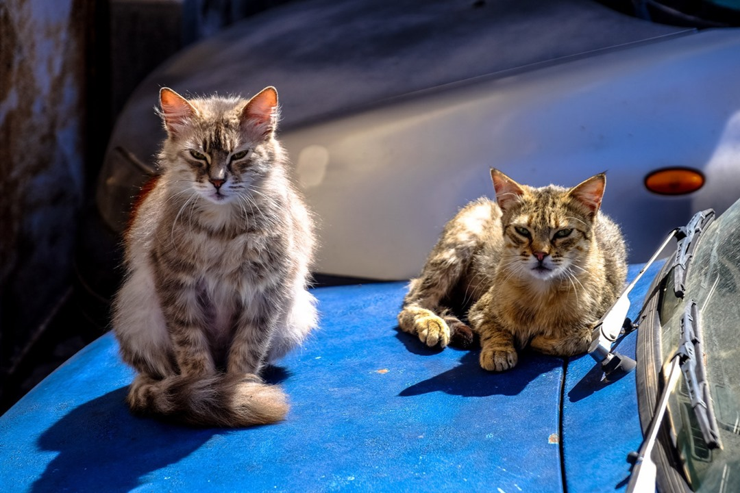 indoor cats vs outdoor cats Indoor cats vs outdoor cats: making the decision the consensus among veterinarians and organizations such as the american veterinary medical association (avma) is that it' s wiser to keep cats indoors.